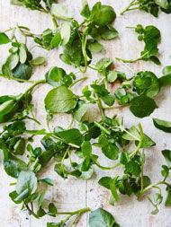 Wild greens & herbs