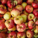 Apple recipes – lots of seasonal apples in a wooden box