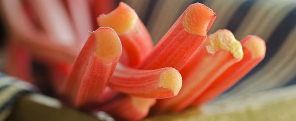 cuts of rhubarb in a bundle together