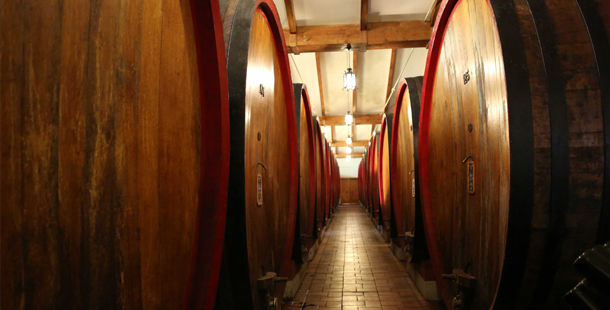 wine in barrels aligned in a row