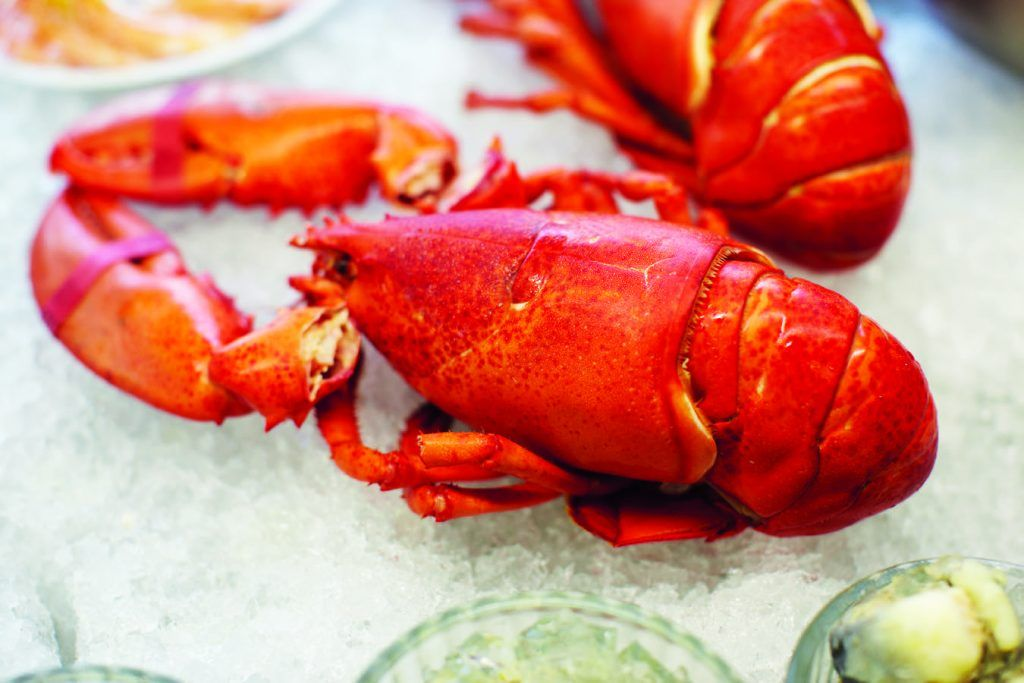 cooked lobster on ice