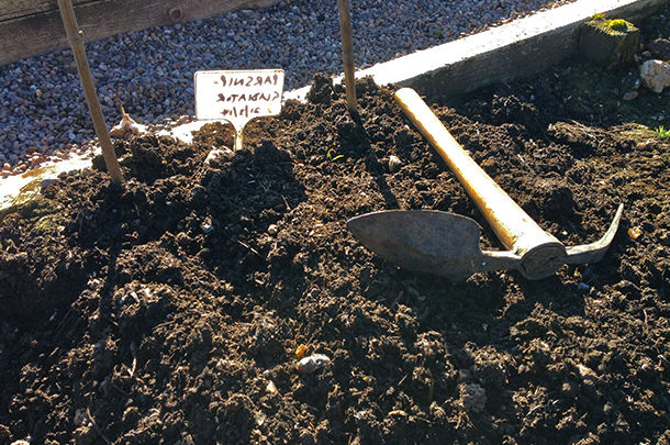 growing seeds in soil with label