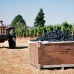 grapes from a vineyard in a wooden box