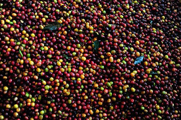 colombian coffee birdseye view image