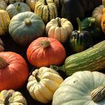 an array of squash in different colours and shapes