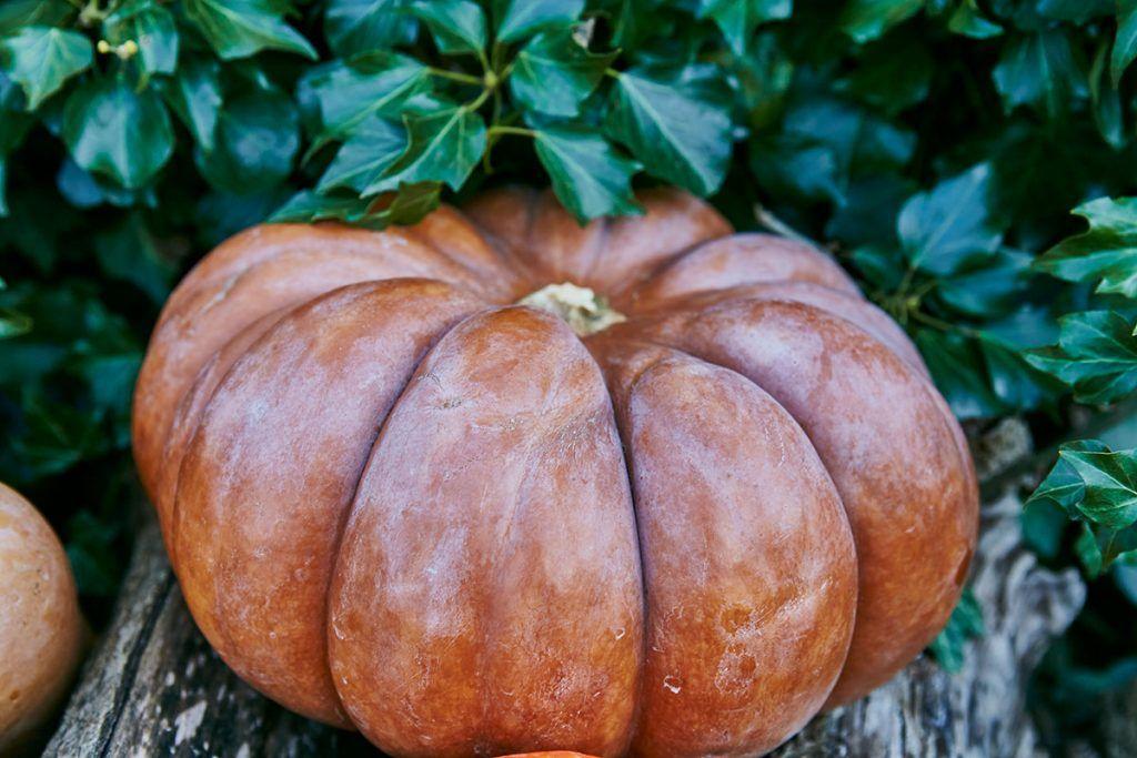 pumpkin in garden sat on log