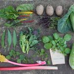 Selection of home grown vegetables