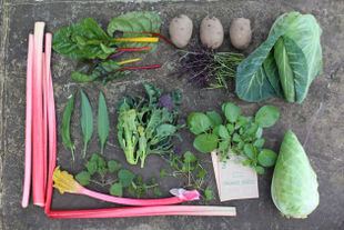 Seasonal vegetables and produce: month by month