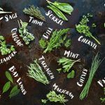 different types of herbs flat lay with names by the side