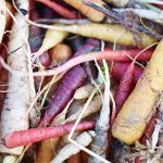 a pile of carrots freshly picked from the ground