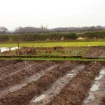farm field with rain and puddles