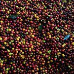 colombian coffee birdseye view image