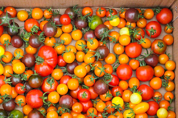 a scatter of tomatoes in a cardboard box