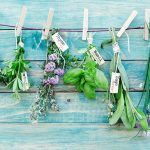 fresh herbs hanging on a line labelled