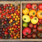 collection of tomatoes in wooden boxes