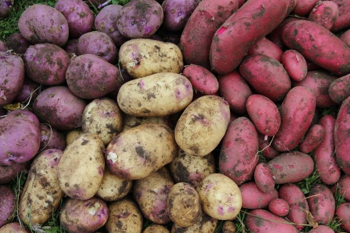 mixed spuds3