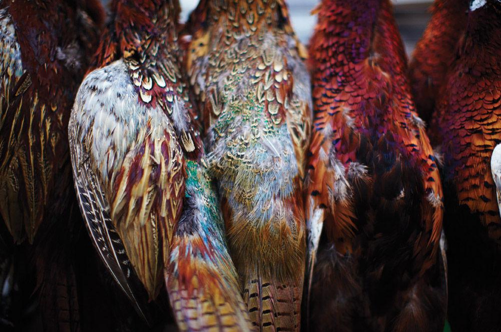 british game birds hanging up