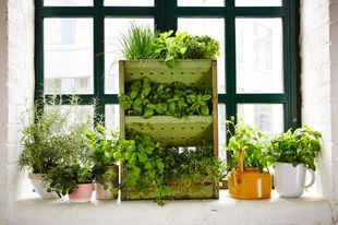 The ultimate guide to growing herbs