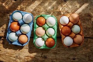 Eggs and animal welfare