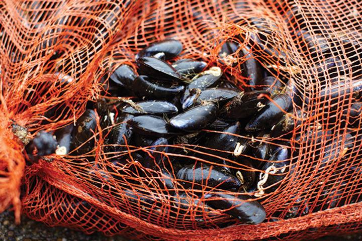 Higher welfare - mussels