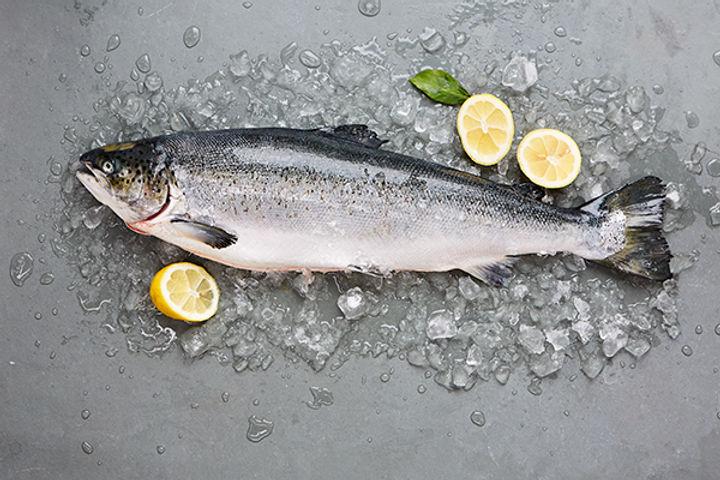 Higher welfare - salmon