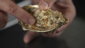 How to shuck oysters: Jamie's Food Team